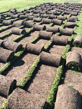 Roll-on lawn for sale