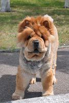 Косметическая стрижка котов или собак