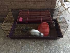2Beautiful Rabbits and large cage