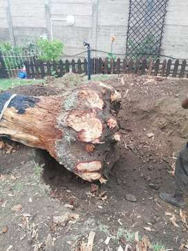 Stumps removal