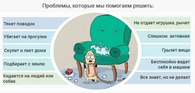 Дрессировка собак в Запорожье - команда SmartDog Запорожье - изображение 7