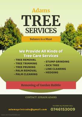 Professional pruning and thinning of garden and fruit trees