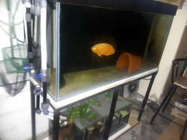 1.3m tank for sale