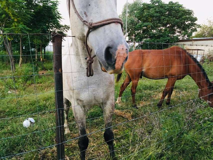 Horse for sale 0