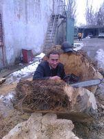 Спил деревьев без вышки