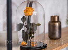 Роза в колбе. Огненный янтарь. Оранжевая. Доставка по всей Украине