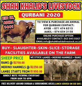 SHEEP ..QURBANI 2020