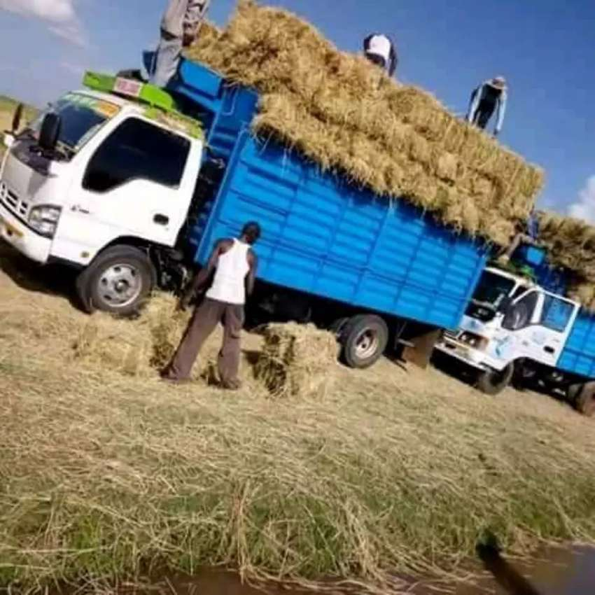 Raw material and animal feeds hay 0