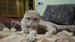Кот погостит у кошки. Вязка