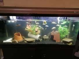 Selling my 3 tanks with pumps and fish as is