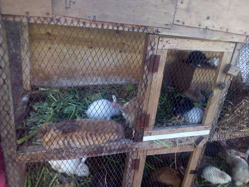 rabbit meat for sale 0