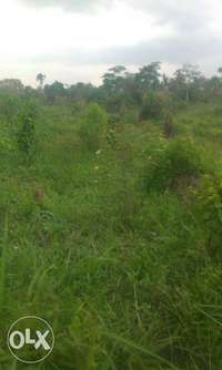 22.5 Acre Land for sale in Semuto 0