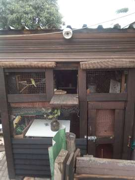 Wooden pigeon loft house for sale