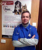 Онлайн консультация ветеринара