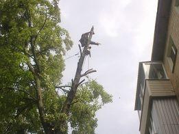 Спил аварийных деревьев :: обрезка сада.