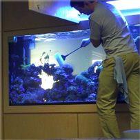 Обслуживание аквариумов и чистка аквариумов пресных и морских НЕДОРОГО