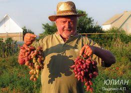 Саженцы винограда от 45 грн, выращиваем сами,около 90 сортов.Пащенко