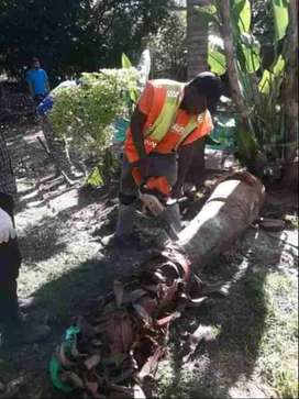 Rodric tree felling and rubble removal service