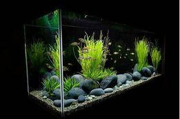 Обслуговування акваріумів, дизайн, оформлення.