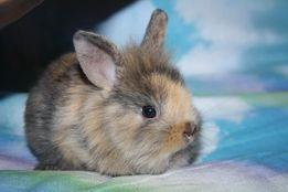 Классные карликовые кролики уже в продаже