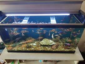 Fish tank for sale with canister pump
