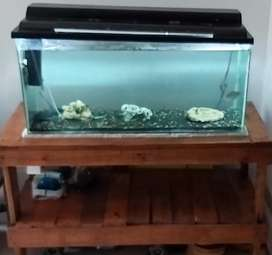 Fish tank and table