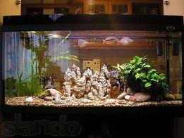обслуживание аквариумов и заселение рыбкой