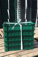 Ящик ЧЕШКА (600x400x115) на 10 кг. - 49 гр
