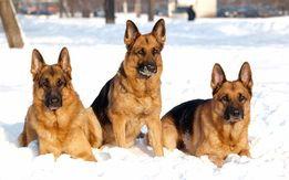 Послуги по дресируванню собак будь яких порід.