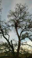 Спил деревьев любой сложности, не дорого, с вывозом