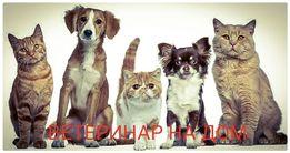 ветеринарный врач, ветеринар на дом
