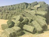 Image of New Bales Available Lucerne Hay Bales Grade A