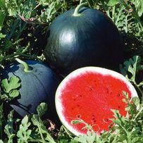 Семена арбуза Огонек, Кримсон Свит, Астраханский в пакете 10 грамм