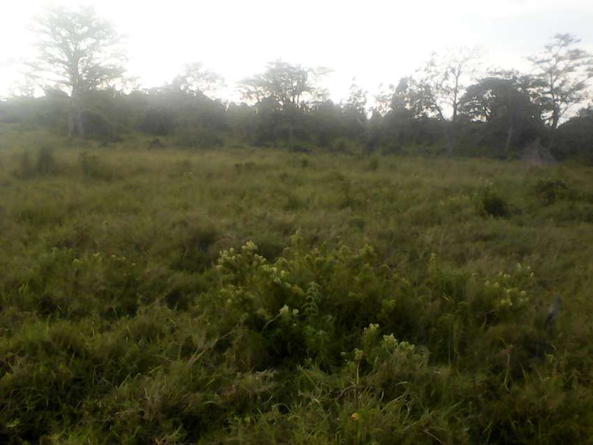 100x100 titled plot in Kitemu on Masaka rd 20 metres from the main rd 0