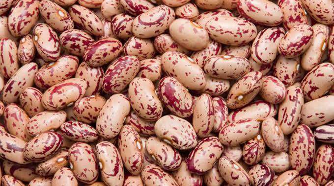 Red Speckled Sugar Beans - Agrietech Group 0