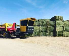 Alfalfa Hay Bales  For buyers of animal feed