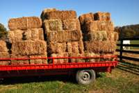 Image of Bales of Veld Grass and Hay available from R35 per bale Pretoria West