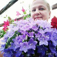 Продам цветы жених и невеста Наполи и Атланта (кампанула,колокольчики