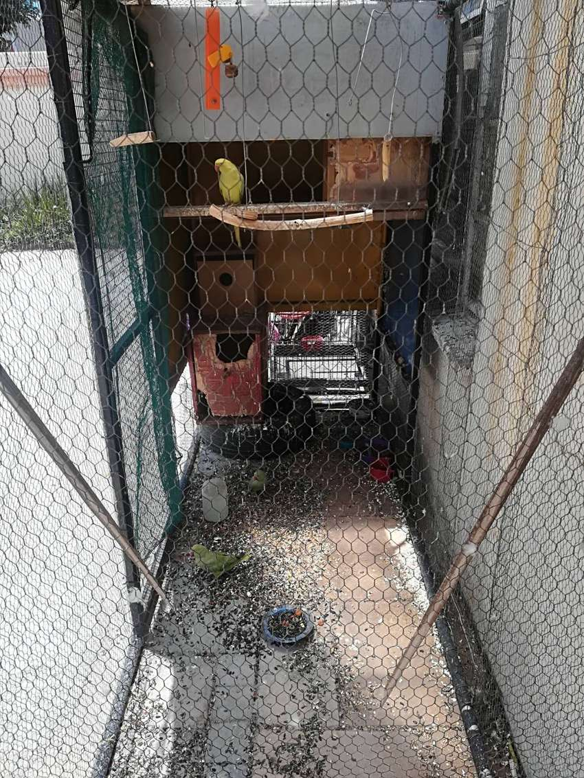 Bird cages and birds 0