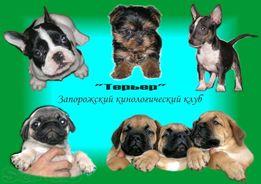 Вязка собак, Запорожский кинологический клуб