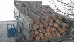 Дрова 16 складометров (камаз)