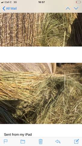 Oats , teff and grass bales for sale