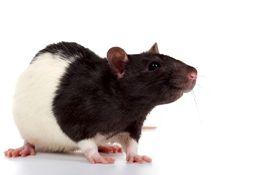 Комбикорм для лабораторных животных
