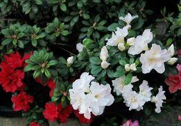 Озеленение помещений, уход за растениями. Флорист-озеленитель.