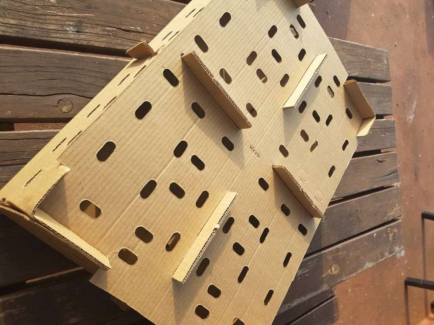 DAY OLD CHICK BOXES - FREE DELIVERY