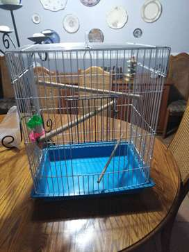 Medium sized bird cage with bird toys