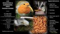 Image of Live mealworms/superworms/mice; dried Phoenix larvae (No Courier fee)