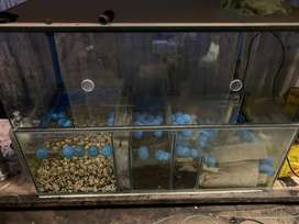 Fish tanks and lots of accesories for sale
