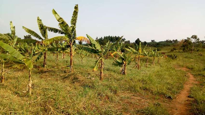 2 acres of land for sale in NAMUGONGO-BUKERERE EACH AT 65M 0