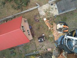 Удаление деревьев, удаление по частям, срез сухих аварийных сосен